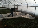 Plantings in the new high tunnel